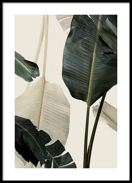 Banana Leaf Shades No1 Poster in the group Posters & Prints / Photography at Desenio AB (12585)