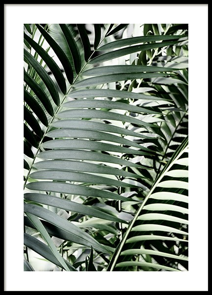 Green Palms Poster in the group Posters & Prints / Photography at Desenio AB (12644)