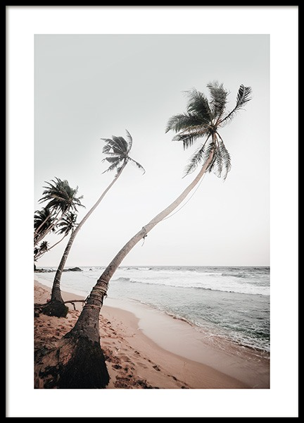 Sri Lanka Palms Poster in the group Posters & Prints / Nature at Desenio AB (12645)