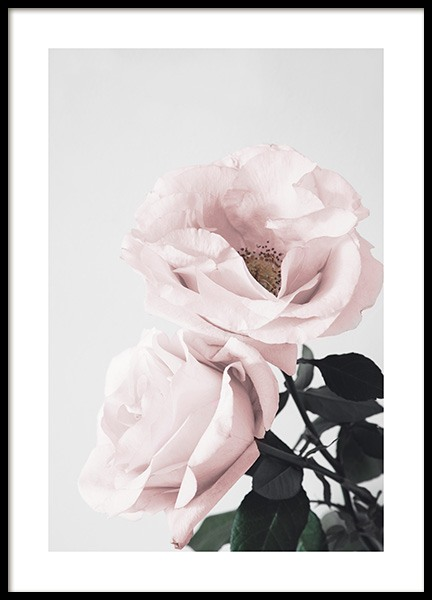 Blooming Roses Poster