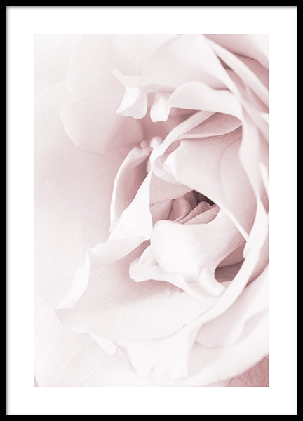 Blossoming rose Poster in the group Posters & Prints / Photography at Desenio AB (12659)