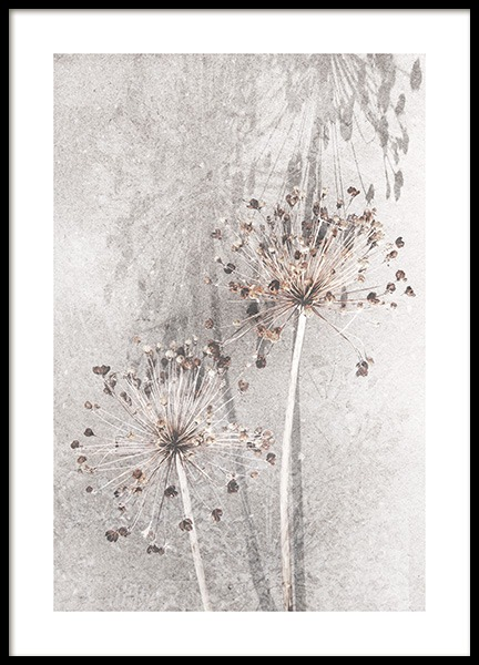 Dried Allium Flowers No1 Poster in the group Posters & Prints / Photography at Desenio AB (12661)