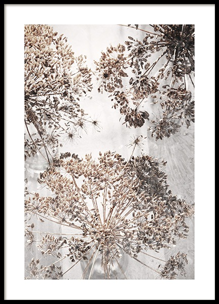 Dried Giant Hogweed No2 Poster in the group Posters & Prints / Photography at Desenio AB (12664)