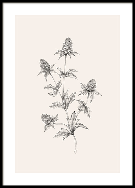 Thistle Sketch Poster in the group Posters & Prints / Sizes / 50x70cm | 20x28 at Desenio AB (12690)