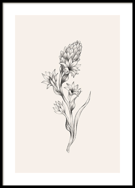 Tuberose Sketch Poster in the group Posters & Prints / Illustrations at Desenio AB (12691)