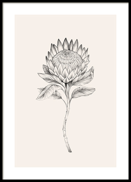 Protea Sketch Poster in the group Posters & Prints / Illustrations at Desenio AB (12693)