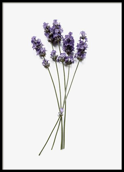 Lavender Poster in the group Posters & Prints / Photography at Desenio AB (12833)