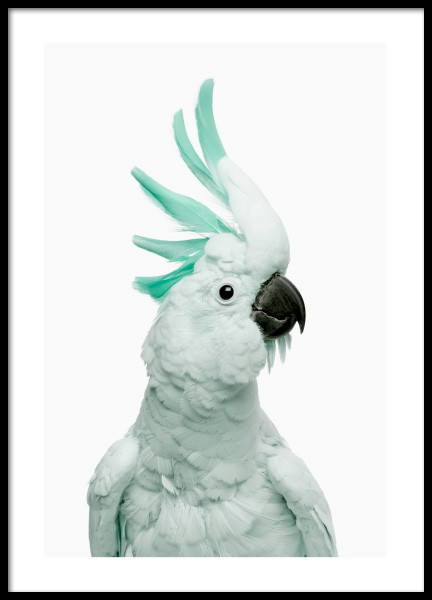 Mint Cockatoo Poster in the group Posters & Prints / Photography at Desenio AB (12842)