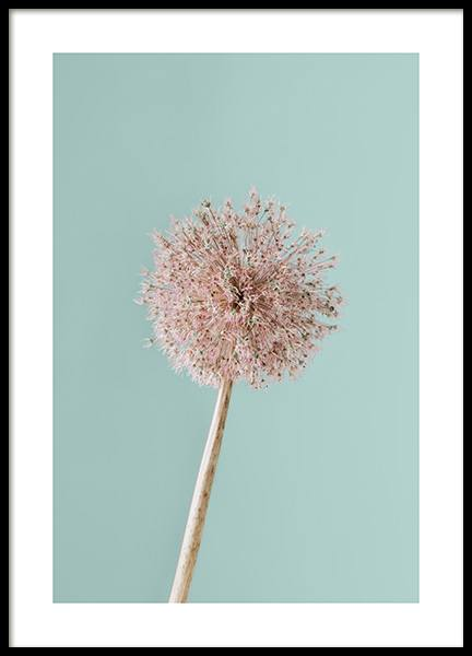 Giant Allium Poster in the group Posters & Prints / Sizes / 30x40cm | 12x16 at Desenio AB (12845)