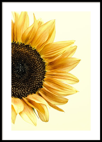 Sunflower Poster in the group Posters & Prints / Photography at Desenio AB (12864)
