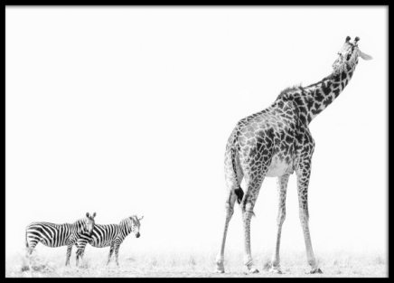 Safari Poster in the group Posters & Prints / Black & white at Desenio AB (12884)