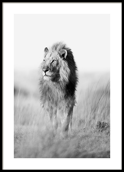 The King of the Jungle Poster in the group Posters & Prints / Black & white at Desenio AB (12885)