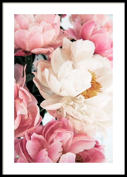 Pink Peonies No1 Poster in the group Posters & Prints / Photography at Desenio AB (12904)