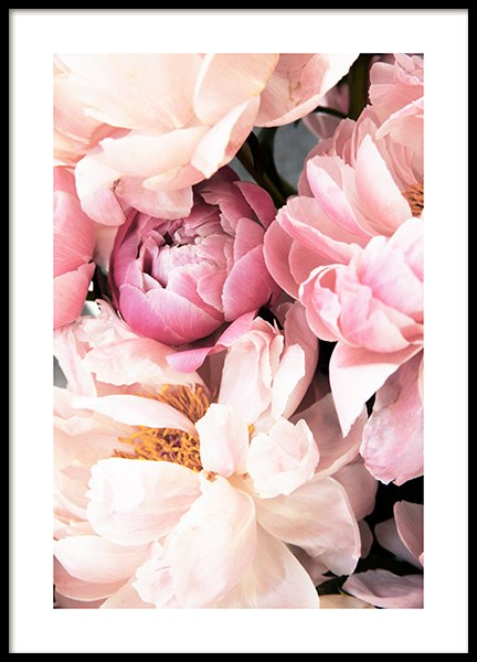 Pink Peonies No2 Poster in the group Posters & Prints / Botanical at Desenio AB (12905)