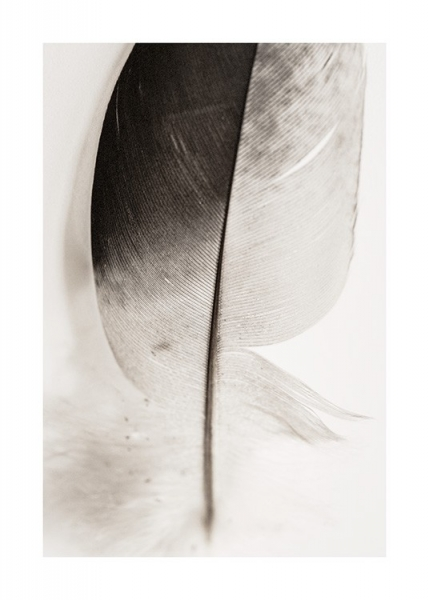 Lost Feather Poster in the group Posters & Prints / Photography at Desenio AB (12982)
