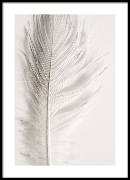Angel Feather Poster in the group Posters & Prints / Photography at Desenio AB (12983)