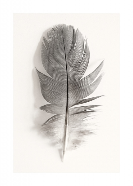 Sparrow Feather Poster in the group Posters & Prints / Photography at Desenio AB (12984)