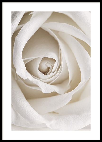 Pale Rose Poster in the group Posters & Prints / Photography at Desenio AB (12987)