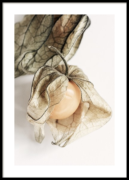 Physalis Poster in the group Posters & Prints / Kitchen at Desenio AB (12992)