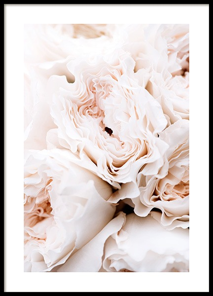Blossoming Roses Poster in the group Posters & Prints / Photography at Desenio AB (12995)