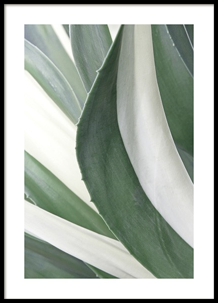 White Stripe Agave Poster in the group Posters & Prints / Photography at Desenio AB (13007)