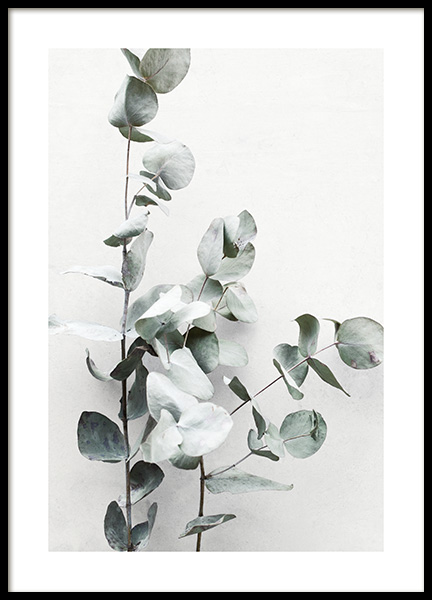 Eucalyptus Twigs No1 Poster in the group Posters & Prints / Photography at Desenio AB (13010)