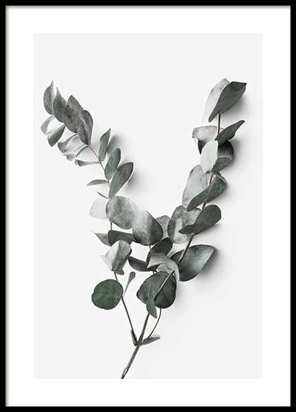 Eucalyptus Twigs No2 Poster in the group Posters & Prints / Botanical at Desenio AB (13011)