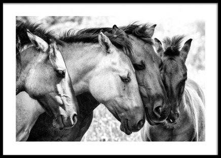 Four Horses Poster in the group Posters & Prints / Black & white at Desenio AB (13037)