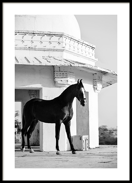 Black Marwari Poster in the group Posters & Prints / Black & white at Desenio AB (13039)