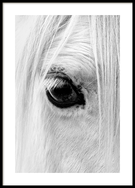 Horse Eye Poster in the group Posters & Prints / Insects & animals /  at Desenio AB (13041)
