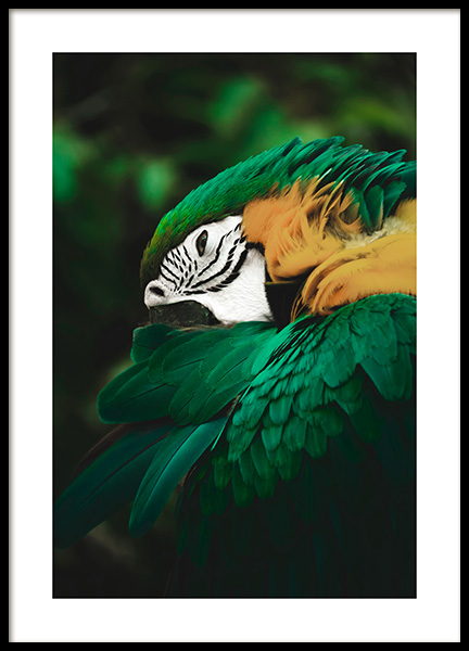 Jungle Parrot Poster in the group Posters & Prints / Photography at Desenio AB (13069)