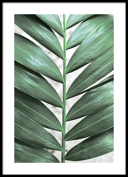Detailed Jungle Leaf Poster in the group Posters & Prints / Photography at Desenio AB (13070)