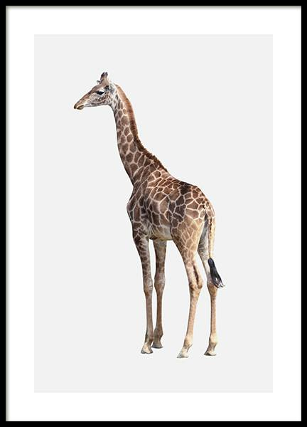 Standing Giraffe Poster in the group Posters & Prints / Kids posters at Desenio AB (13078)