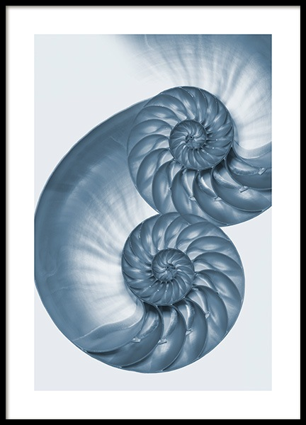 Blue Seashell Poster in the group Posters & Prints / Nature at Desenio AB (13094)