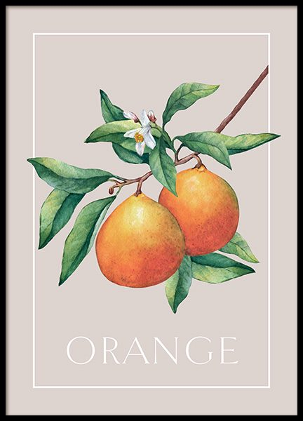 Vintage Oranges Poster in the group Posters & Prints / Kitchen at Desenio AB (13101)