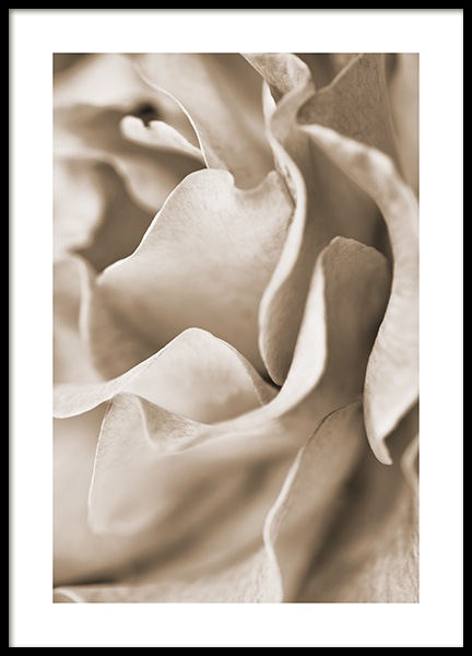 Muted Rose Poster