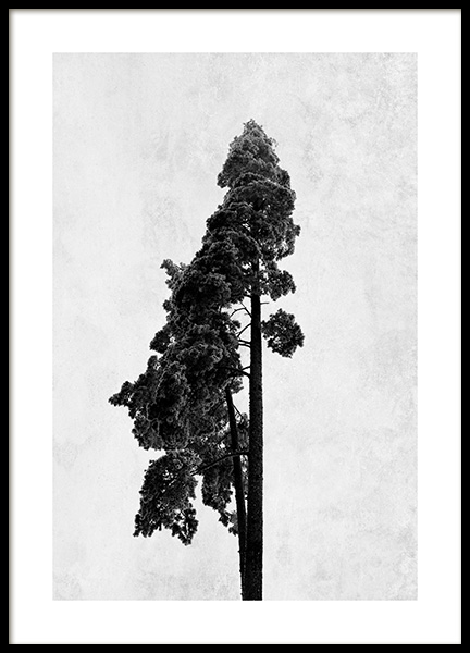 Pine Tree Poster in the group Posters & Prints / Black & white at Desenio AB (13205)