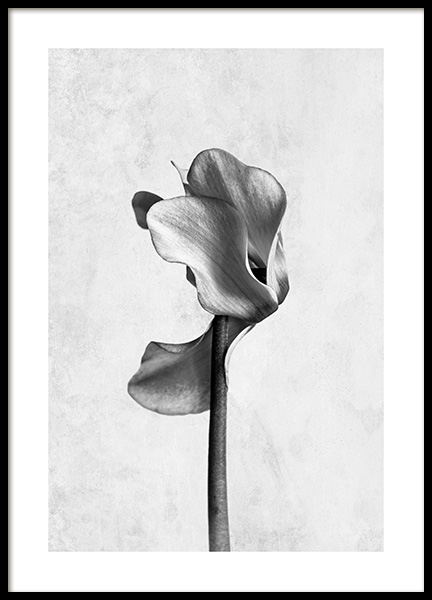 Cyclamen Flower Poster in the group Posters & Prints / Black & white at Desenio AB (13207)