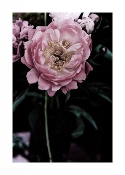 Dark Flowers No3 Poster in the group Posters & Prints / Photography at Desenio AB (13214)