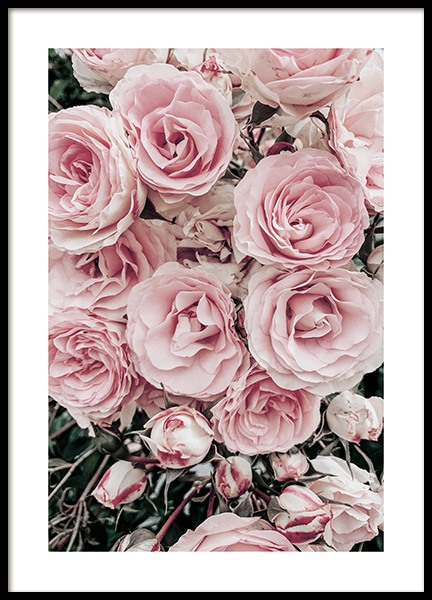 Dreamy Roses Poster in the group Posters & Prints / Photography at Desenio AB (13224)
