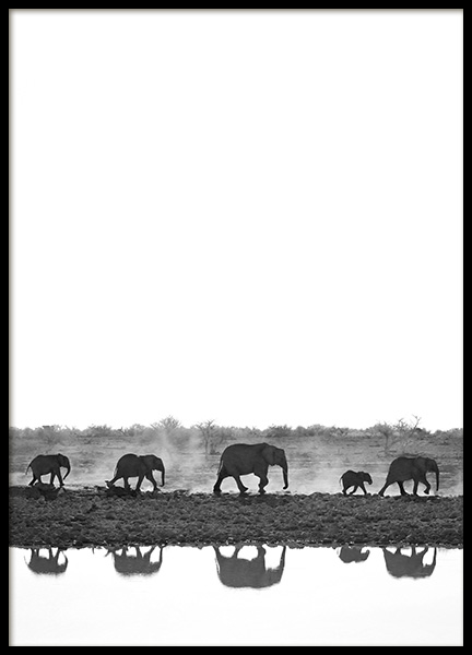 Elephant Walk Poster in the group Posters & Prints / Black & white at Desenio AB (13249)