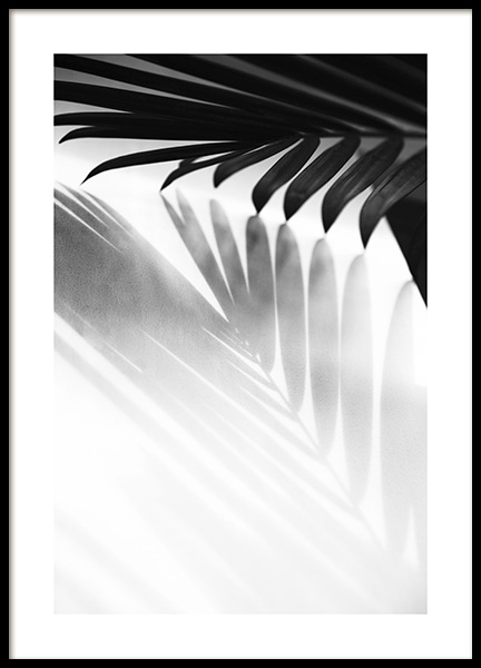 Palm Shadow B&W Poster in the group Posters & Prints / Black & white at Desenio AB (13251)