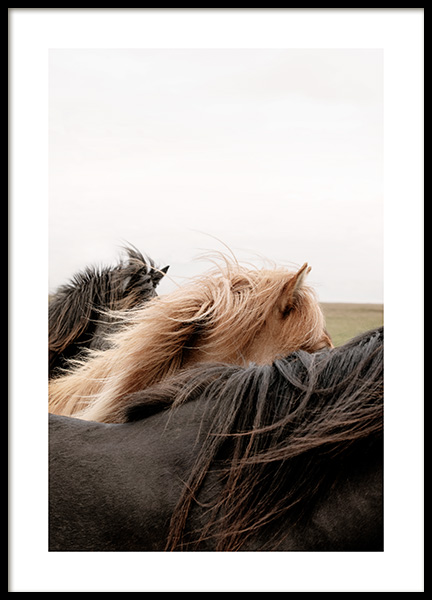 Horses of Iceland Poster in the group Posters & Prints / Photography at Desenio AB (13354)