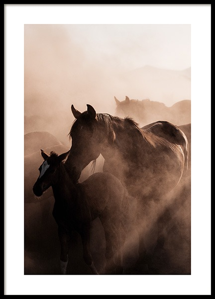 Herd of Wild Horses Poster in the group Posters & Prints / Insects & animals at Desenio AB (13516)
