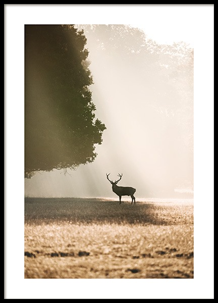 Red Deer in the Sunlight Poster in the group Posters & Prints / Insects & animals at Desenio AB (13517)
