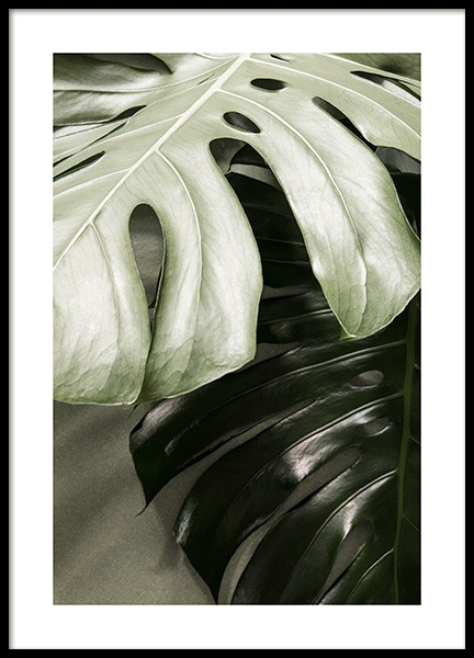 Monstera together Poster in the group Posters & Prints / Botanical / Monsteras at Desenio AB (13571)