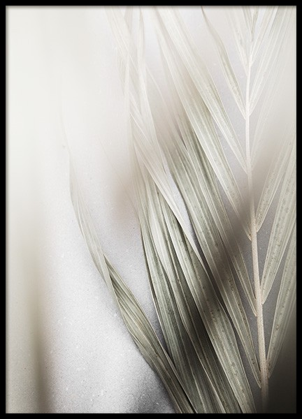 Foggy Palm Leaf Poster in the group Posters & Prints / Botanical / Palms at Desenio AB (13574)