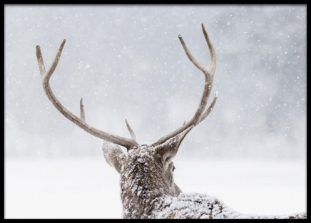 Deer in the Snow Poster in the group Posters & Prints / Insects & animals at Desenio AB (13589)