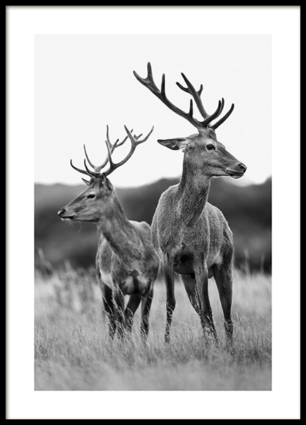 Deer Friends Poster in the group Posters & Prints / Insects & animals at Desenio AB (13590)