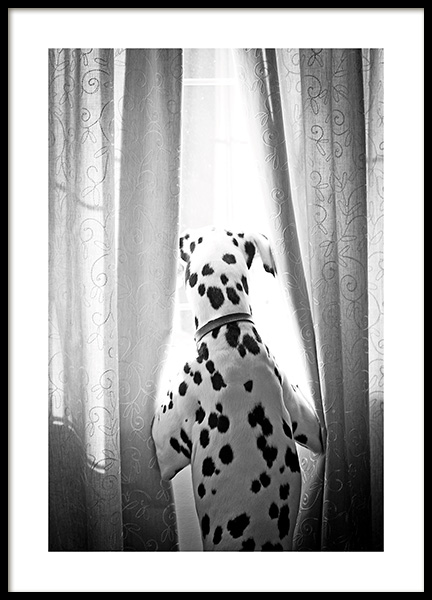 Dog in Window Poster